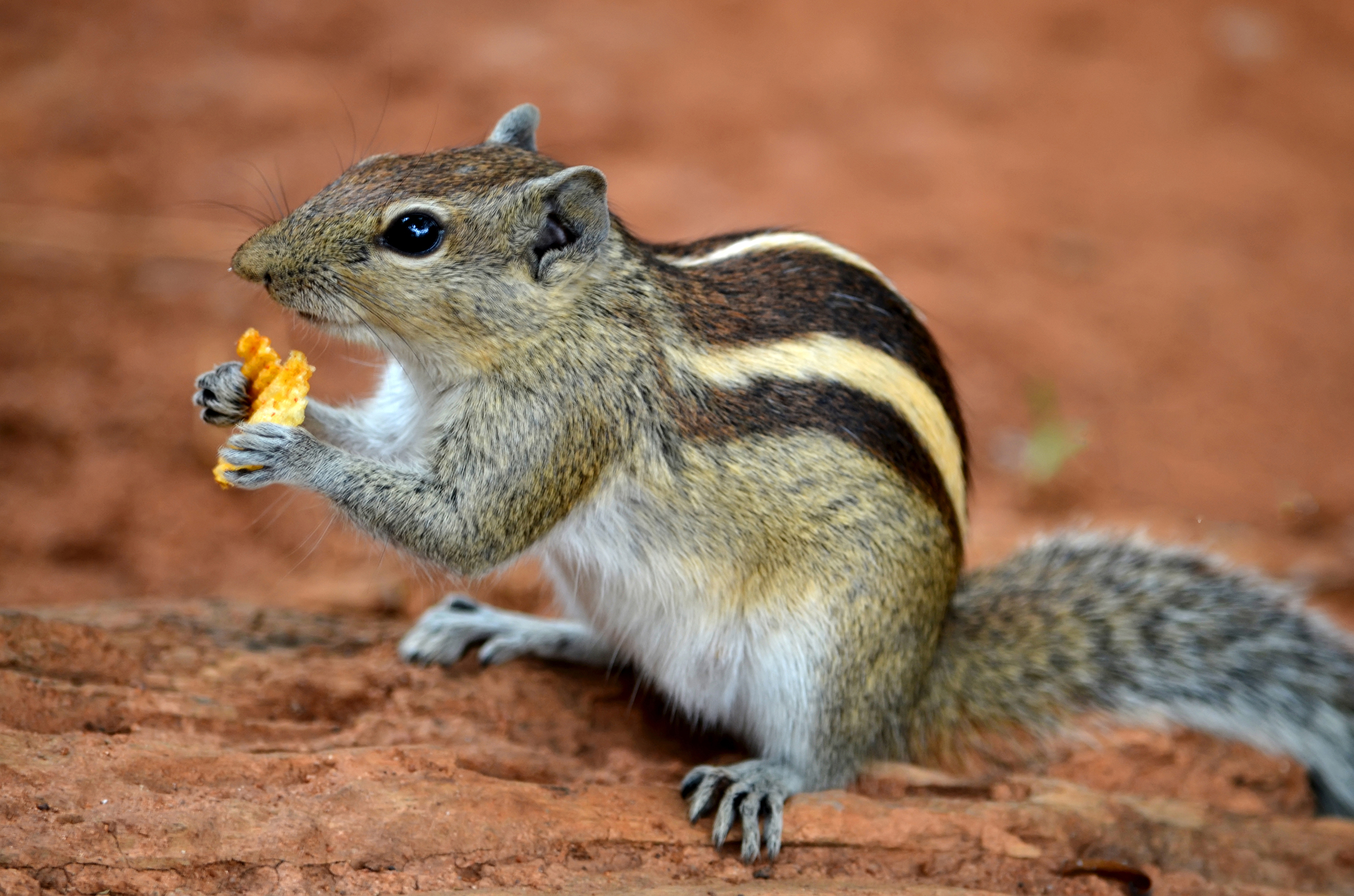 rodent control - squirrel removal page