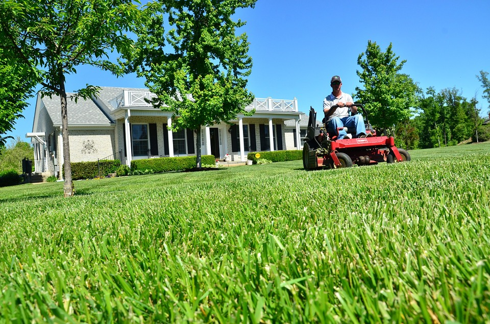 weed control - lawn care/grass information page