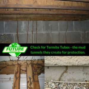 mud tubes are a sign of termites