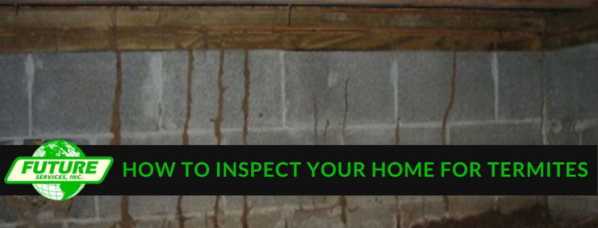 How to inspect your home for termites