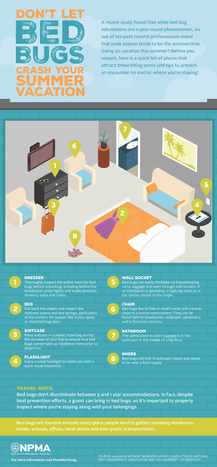 Bed Bug Exterminators - infographic about bed bugs